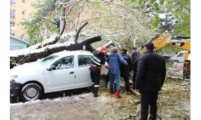 Acțiune de îndepărtare a arborilor cazuți în urma ninsorii - 20 aprilie 2017