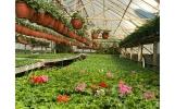 Direcția de Dezvoltare Servicii Publice pune la dispoziția asociațiilor de proprietari material dendrologic pentru înfrumusețarea grădinilor
