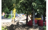 Teii de pe Strada Bucegi vor fi tratați/înlocuiți pe banii constructorului
